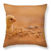 Chick In Poultry Barn Throw Pillow