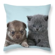 Chihuahua Puppy And British Shorthair Throw Pillow