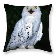 Chouette Harfang Nyctea Scandiaca Throw Pillow