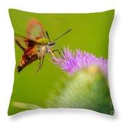 Clearwing Hummingbird Moth Throw Pillow
