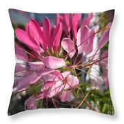 Cleome Named Cherry Queen Throw Pillow