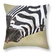 Close-up Of A Burchells Zebra Equus Throw Pillow