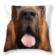 Close Up Portrait Of A Bloodhound Throw Pillow