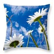 Close-up Shot Of White Daisy Flowers From Below Throw Pillow