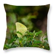 Clouded Sulphur Butterfly Throw Pillow