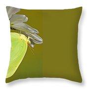Cloudless Sulphur Butterfly Throw Pillow