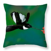 Collared Inca Hummngbird Throw Pillow