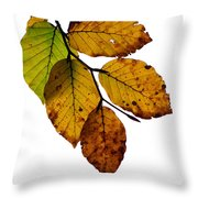 Colorful Leaves Isolated On A White Background Throw Pillow
