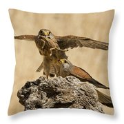 Common Kestrel Falco Tinnunculus Throw Pillow