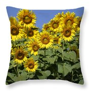 Common Sunflower Flowers Japan Throw Pillow
