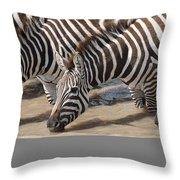 Common Zebras Drinking Water Throw Pillow