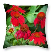 Coneflowers Echinacea Rudbeckia Throw Pillow
