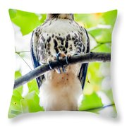 Coopers Hawk Perched On Tree Watching For Small Prey Throw Pillow