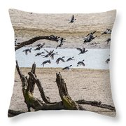 Coots-mud Hens Throw Pillow