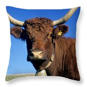 Cow Salers Throw Pillow by Bernard Jaubert