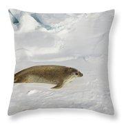 Crabeater Seal, Antarctica Throw Pillow