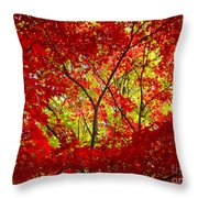 Crimson Window Throw Pillow