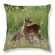 Curious Whitetail Throw Pillow