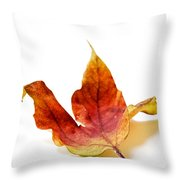 Curled Autumn Leaf Isolated On White Throw Pillow
