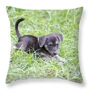 Cute Puppy In The Grass Throw Pillow by Jannis Werner