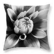 Dahlia Named Mystery Day Throw Pillow