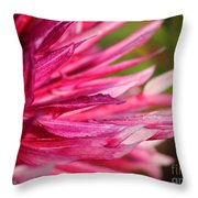 Dahlia Named Normandy Wild Willie Throw Pillow