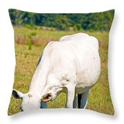 Dairy Cow Throw Pillow