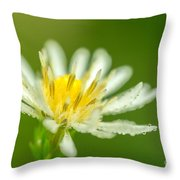 Daisy Fleabane Erigeron Annuus Throw Pillow