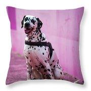 Dalmatian 6 Throw Pillow
