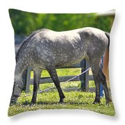 Dapple Grey Horse Throw Pillow