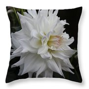 Darling Dahlia Throw Pillow