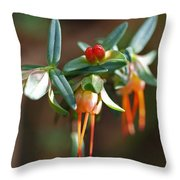 Darwinia Citriodora Throw Pillow
