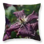 Deep Purple Clematis Throw Pillow