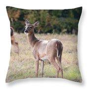 Deer At Paynes Prairie Throw Pillow