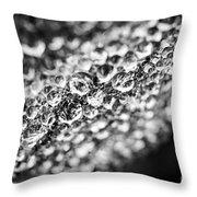 Dew Drops On Leaf Edge Throw Pillow