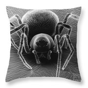 Dictynid Spider Throw Pillow