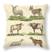 Different Kinds Of Sheep Throw Pillow