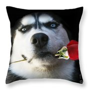 Do You Tango Throw Pillow