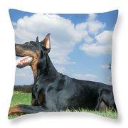 Doberman Pinscher Dog Throw Pillow