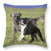 Dogs Playing With Stick Throw Pillow