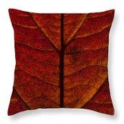 Dogwood Leaf Backlit Throw Pillow