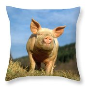 Domestic Pig Throw Pillow