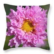 Double Click Cosmos Named Rose Bonbon Throw Pillow