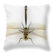 Dragonfly Isolated Throw Pillow
