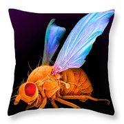 Drosophila Throw Pillow