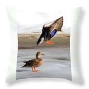 Ducking Around Throw Pillow