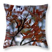 Early Fall Of Rowan Throw Pillow