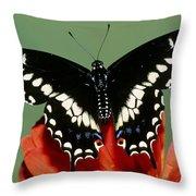 Eastern Black Swallowtail Butterfly Throw Pillow