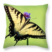 Eastern Tiger Swallowtail Butterfly Square Throw Pillow