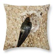 Edible-nest Swiftlet On Nest Throw Pillow